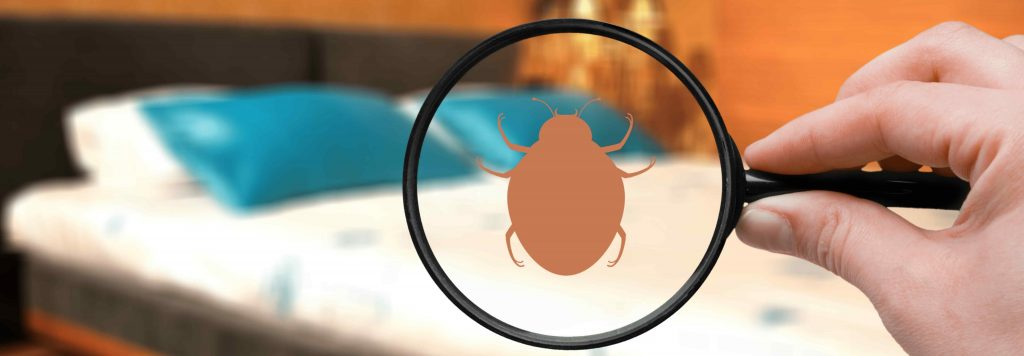 Importance of Pest Control in the Hospitality Industry